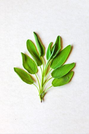 aromatic herbs and spices washed and ready for your recipes, for infusions and liqueurs - sage