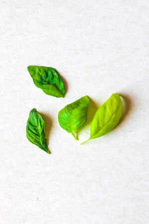 aromatic herbs and spices washed and ready for your recipes, for infusions and liqueurs - basil