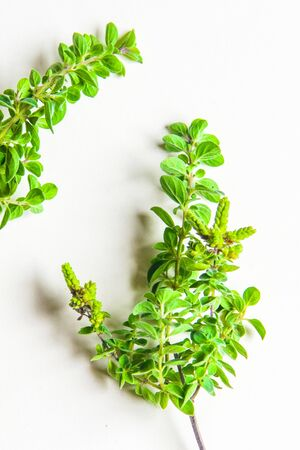 aromatic herbs and spices washed and ready for your recipes, for infusions and liqueurs - marjoram Zdjęcie Seryjne