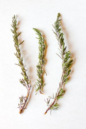 aromatic herbs and spices washed and ready for your recipes, for infusions and liqueurs - rosemary Archivio Fotografico