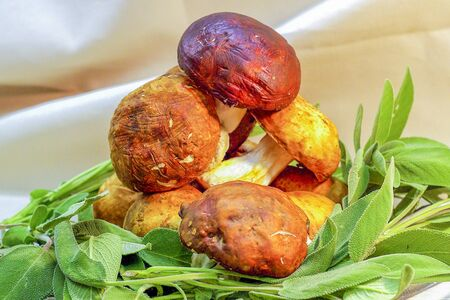 porcini mushrooms on aromatic herbs