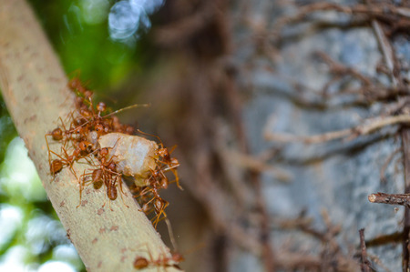 leaf cutter ant: ant unity food