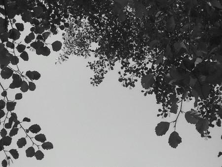 nature photo: Nature: black and white photo aspect, beautiful detail