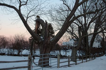 Broken tree standing in the snow at sunset