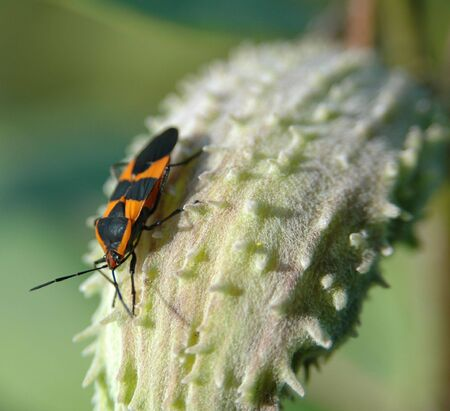 Orange and Black Bug Stok Fotoğraf