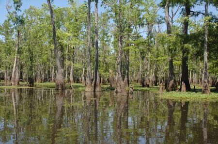 Louisiana bayou on a sunny spring day Stock Photo - 2940524