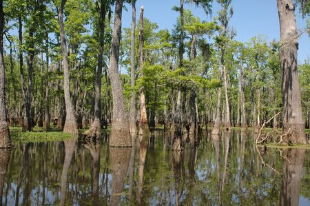 Louisiana bayou on a sunny spring day Stock Photo - 2940523