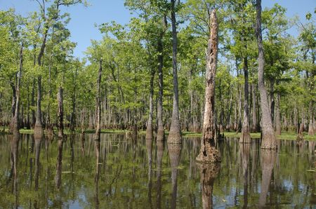 Louisiana bayou on a sunny spring day Фото со стока - 2940512