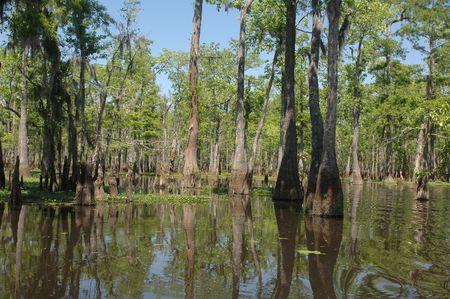 bayou swamp: Louisiana bayou on a sunny spring day
