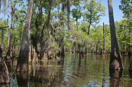 Louisiana bayou on a sunny spring day Stock Photo - 2940521