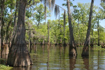 Louisiana Bayou on a sunny spring day Фото со стока