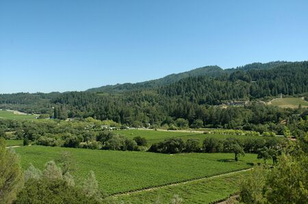 Sweeping view of a Napa Valley vineyard on a clear summer day