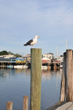 ma: Seagull sitting on a piling in Gloucester Harbor Stock Photo