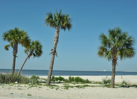 Palm trees in the sand at the edge of the Gulf of Mexico at Biloxi Beach