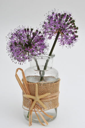 Allium in an apothecary jar decorated with a starfish