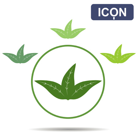 young leaves: Tea three leaves icon vector
