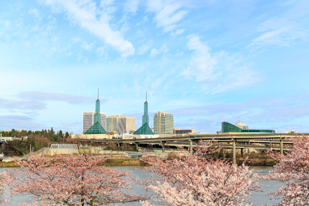 Cherry trees in bloom on the waterfront with the Convention Center, Portland Oregon.