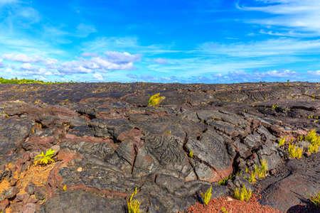 big island: Aged lava field covered with plants, on Big Island, Hawaii.