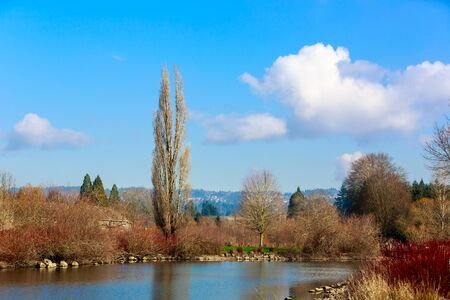 A tall tree stands alone by the lake in Commonwealth Lake Park  Beaverton Oregon.