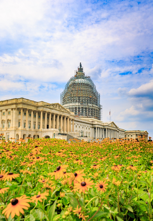famous industries: United States Capitol Building in front of flowers, with the scaffolding around the dome for restoration project.