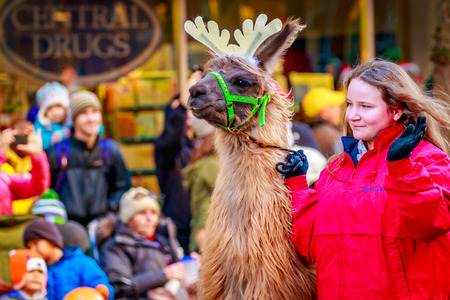 macys: Portland, Oregon, USA - November 27, 2015: The Llamas of Southwest Washington in the annual My Macys holiday Parade across Portland Downtown. Editorial
