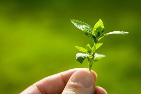 contaminacion ambiental: Hoja verde con las gotas de lluvia, bien por cuestiones tales como medio ambiente, la ecolog�a y la contaminaci�n.
