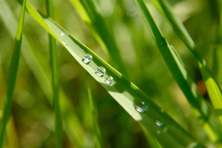 Green leaf with rain droplets, Good for issues such as environment, ecology and Pollution.