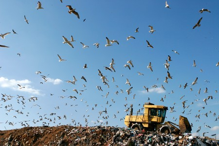 carelessness: Landfill with bulldozer working, against beautiful blue sky full of sea birds. Great for environment and ecological themes  Stock Photo