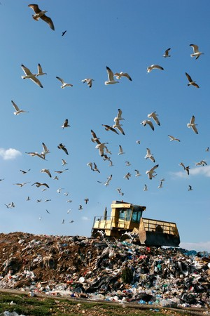 Landfill with bulldozer working, against beautiful blue sky full of sea birds. Great for environment and ecological themes  Stock Photo
