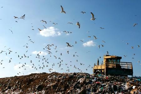 Mülldeponie mit Bulldozer arbeitet, gegen schönen blauen Himmel voll von Seevögel. Ideal für Umwelt- und ökologische Themen  Standard-Bild