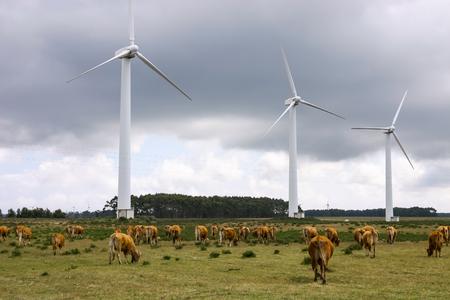 viento: Granja eólica. Molinos de viento modernos o turbinas de viento en el paisaje rural. La electricidad se alimenta ecológico y considera mejor para el medio ambiente por el petróleo y otros combustibles fósiles. Un recurso renovable de energía. Foto de archivo