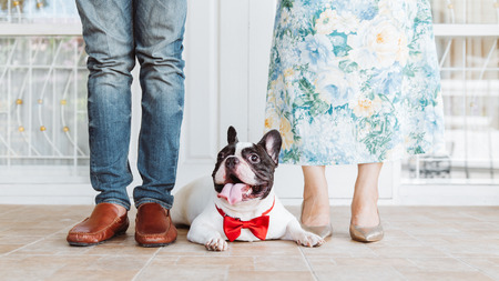 lovely couple: vintage style picture of a couple with their cute french bulldog for wedding day