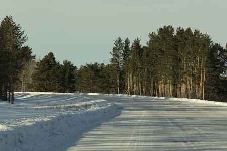 pinus sylvestris: nature, forest, trees, vegetation, pine, coniferous, Green, winter, pinus, sylvestris