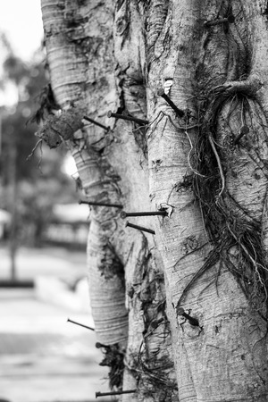 disruption: nail on the tree trunk at a park in Thailand Stock Photo