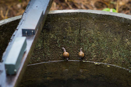 persevere: twin snails in the pond.