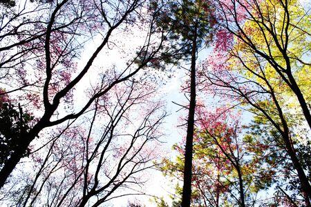 color in: muchos color en el bosque en oto�o Foto de archivo