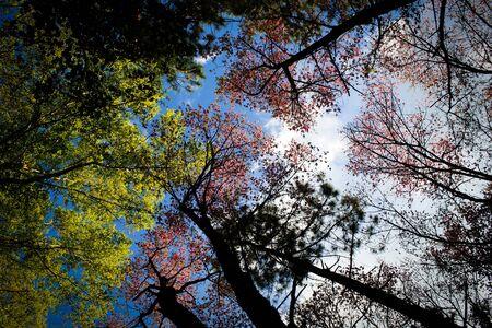 colour in: muchos color en el bosque en otoño Foto de archivo
