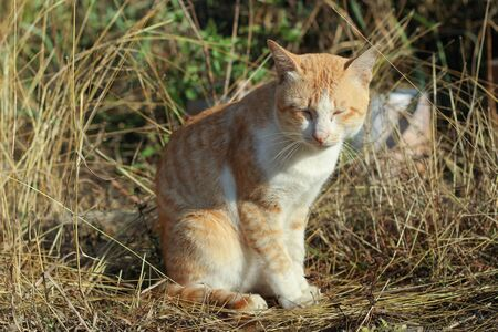 close your eyes: a cat take sunbathe in the morning