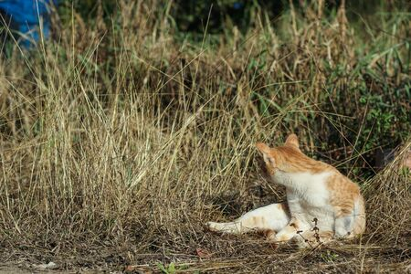turn back: cat turn back in the meadow