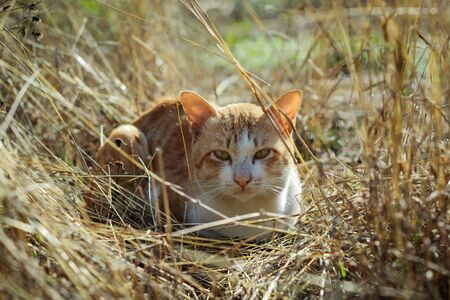 rainless: striped  cat in the meadow Stock Photo