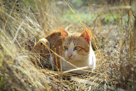 close your eyes: striped  cat in the meadow Stock Photo