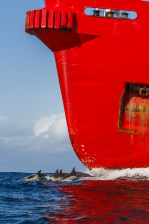 long johns: Dolphin and Red cargo ship,South Africa