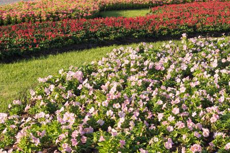 jardines flores: Hermosas flores Gardan, jardines de flores en Tailandia