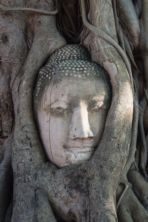 buddhism prayer belief: Buddha head in the roots tree, wat phra mahathat at ayutthaya historical park in thailand Stock Photo