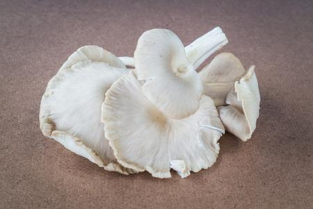 asian angel: sajor-caju mushroom on plywood, vintage style picture Stock Photo