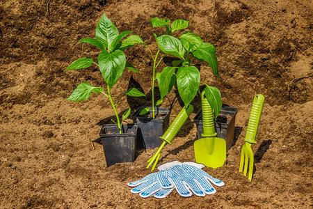 black soil: Pot with seedlings  garden tools equipment gloves background  black soil Stock Photo