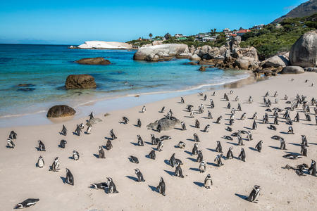 Pinguins in Cape Town South Africa Imagens - 44191366