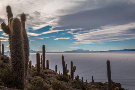 sud: Fish Island in Uyuni Bolivia