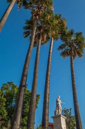 Palm Trees in Nice France