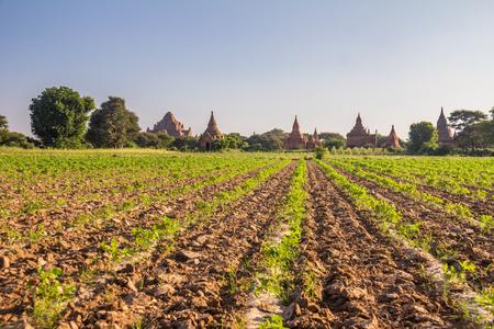 Farm in Bagan Burma